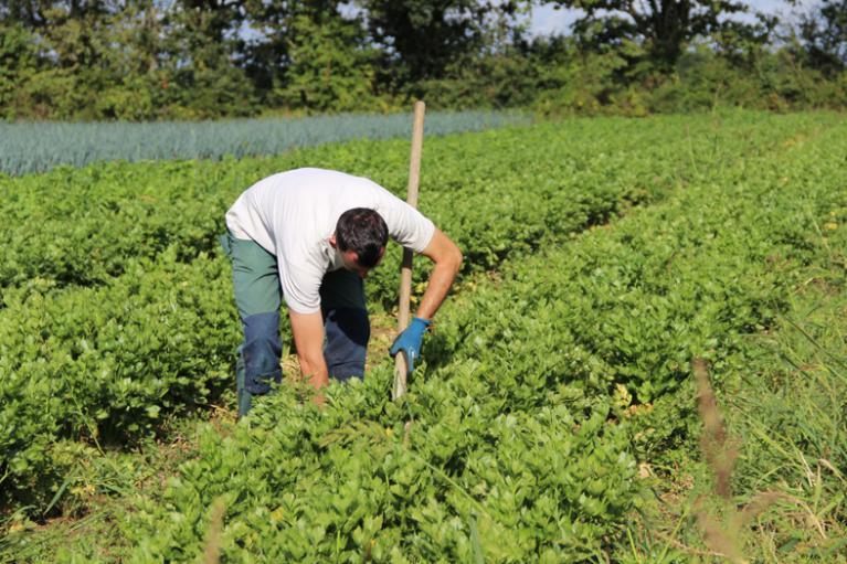 Nous Nutilisons Aucun Desherbant Chimique Uniquement Du Desherbage Manuel Ou Mecanique Limitons Les Mauvaises Herbes En Utilisant Des Toiles De